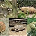 木柵動物園-2017-07-08.jpg