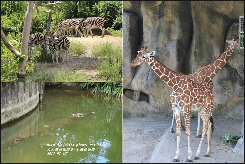 木柵動物園-2017-07-11.jpg