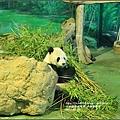 木柵動物園-2017-07-15.jpg