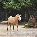 木柵動物園-2017-07-27.jpg