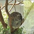 木柵動物園-2017-07-29.jpg