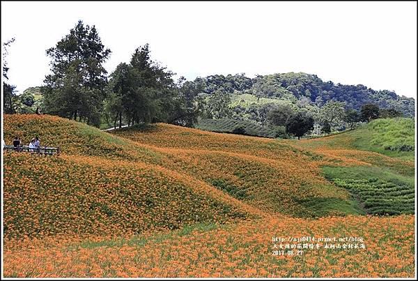 赤柯山金針花季-2017-08-04.jpg