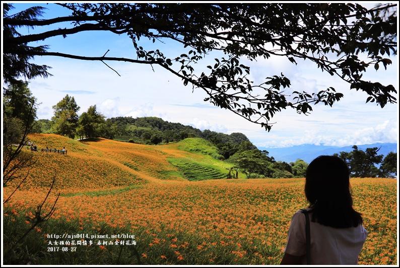 赤柯山金針花季-2017-08-07.jpg