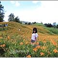 赤柯山金針花季-2017-08-10.jpg