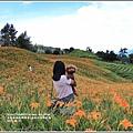 赤柯山金針花季-2017-08-11.jpg