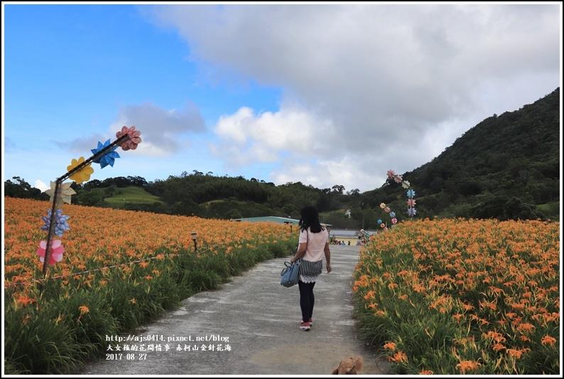 赤柯山金針花季-2017-08-18.jpg