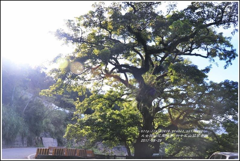 六十石山茄苳老樹-2017-08-01.jpg