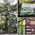 六十石山茄苳老樹-2017-08-02.jpg