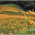 赤柯山金針花季-2017-08-71.jpg