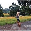 赤柯山金針花季-2017-08-77.jpg