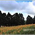 赤柯山金針花季-2017-08-83.jpg