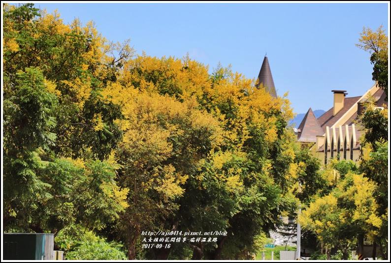 瑞祥溫泉路台灣欒樹-2017-09-06.jpg