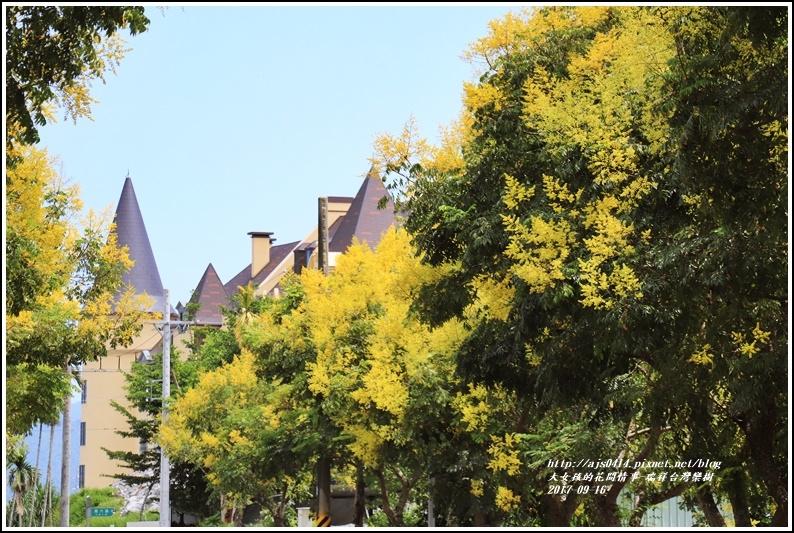 瑞祥溫泉路台灣欒樹-2017-09-12.jpg