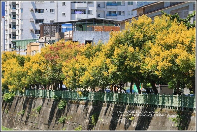 七腳川溪台灣欒樹-2017-09-14.jpg