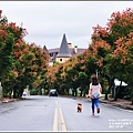 溫泉路台灣欒樹-2017-10-02.jpg