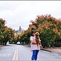 溫泉路台灣欒樹-2017-10-04.jpg