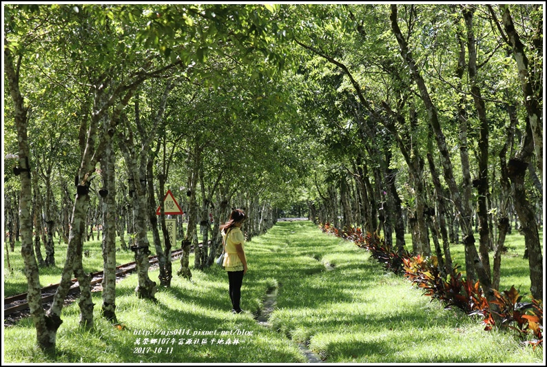 富興社區平地森林-2017-10-15.jpg