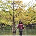 鈺展園藝(落羽松森林)-2017-11-03.jpg