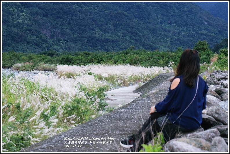 紅葉溪甜根子草-2017-11-16.jpg