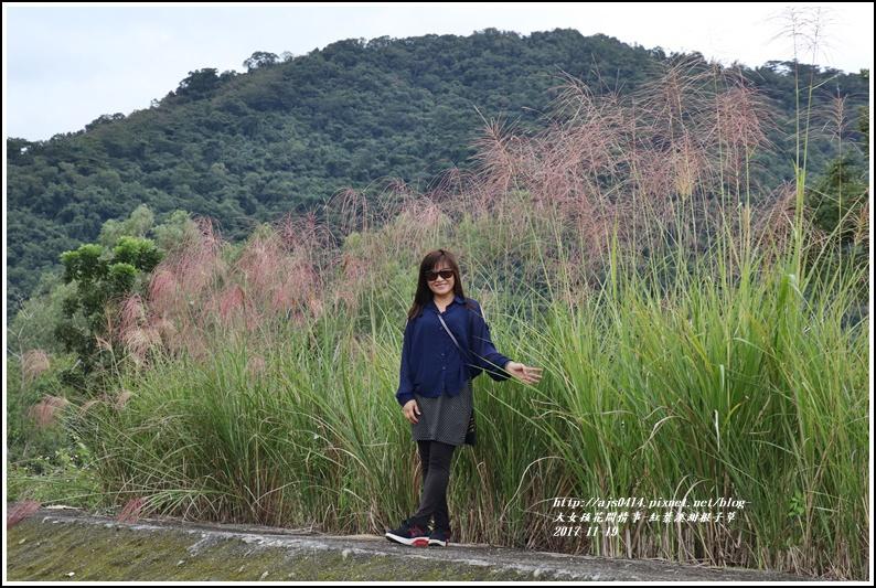 紅葉溪甜根子草-2017-11-31.jpg