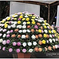 士林官邸菊花展-2017-12-10.jpg