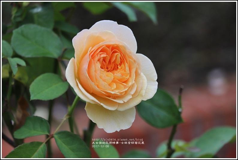 士林官邸菊花展(玫瑰園)-2017-12-19.jpg