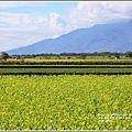油菜花田-2018-01-34.jpg
