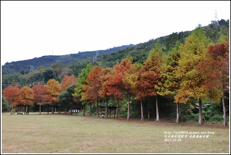 光復森林公園-2017-12-04.jpg