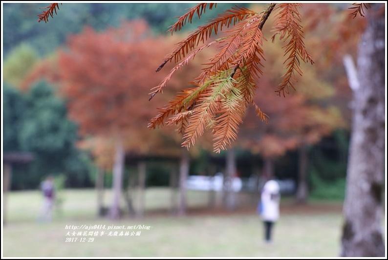 光復森林公園-2017-12-08.jpg