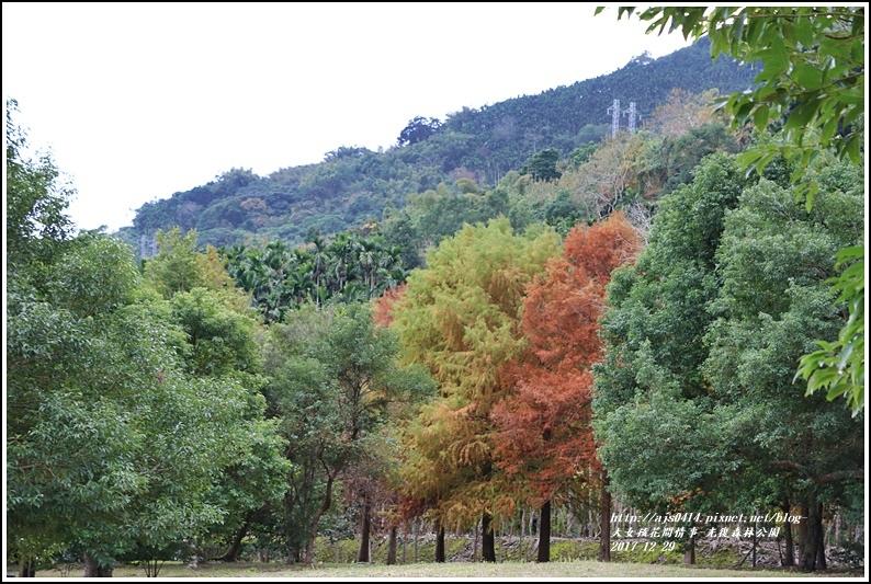 光復森林公園-2017-12-19.jpg