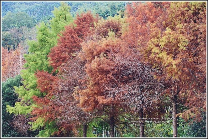 光復森林公園-2018-01-36.jpg