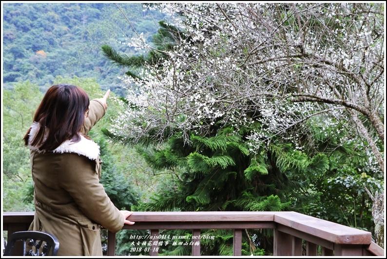 林田山梅花香-2018-01-04.jpg