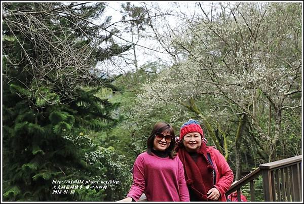 林田山梅花香-2018-01-14.jpg
