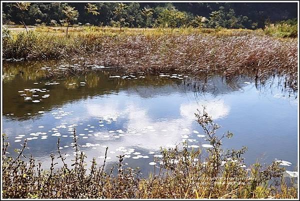 新良濕地-2017-12-13.jpg