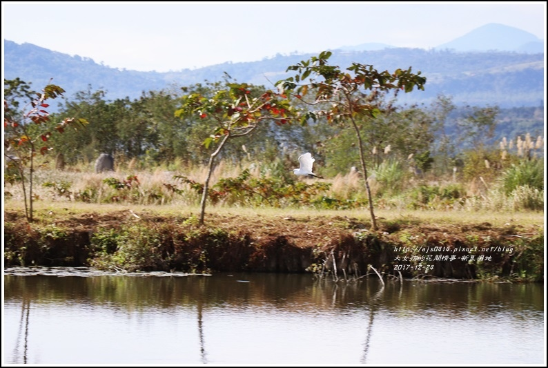 新良濕地-2017-12-27.jpg
