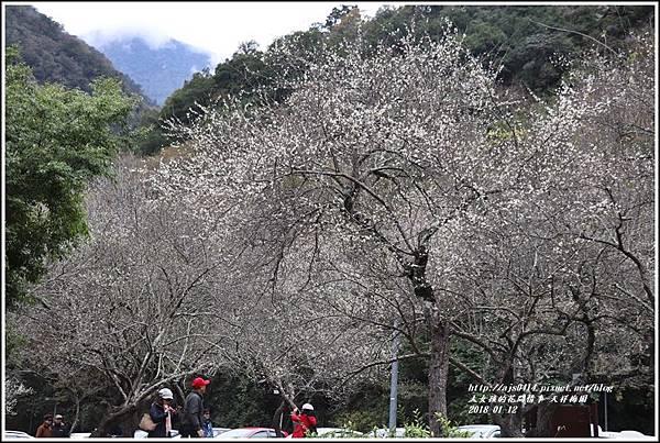 天祥梅園-2018-01-13.jpg