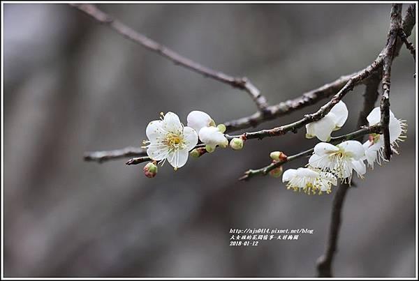 天祥梅園-2018-01-32.jpg