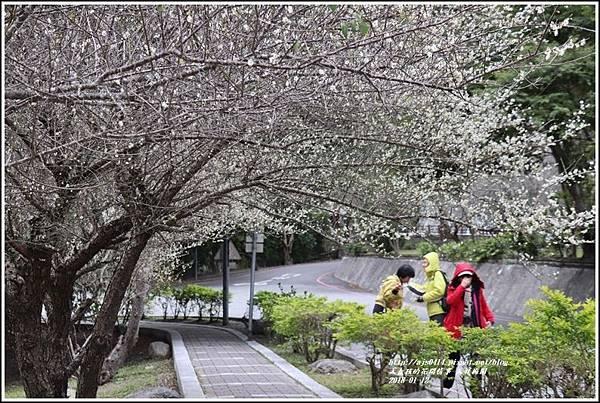 天祥梅園-2018-01-57.jpg