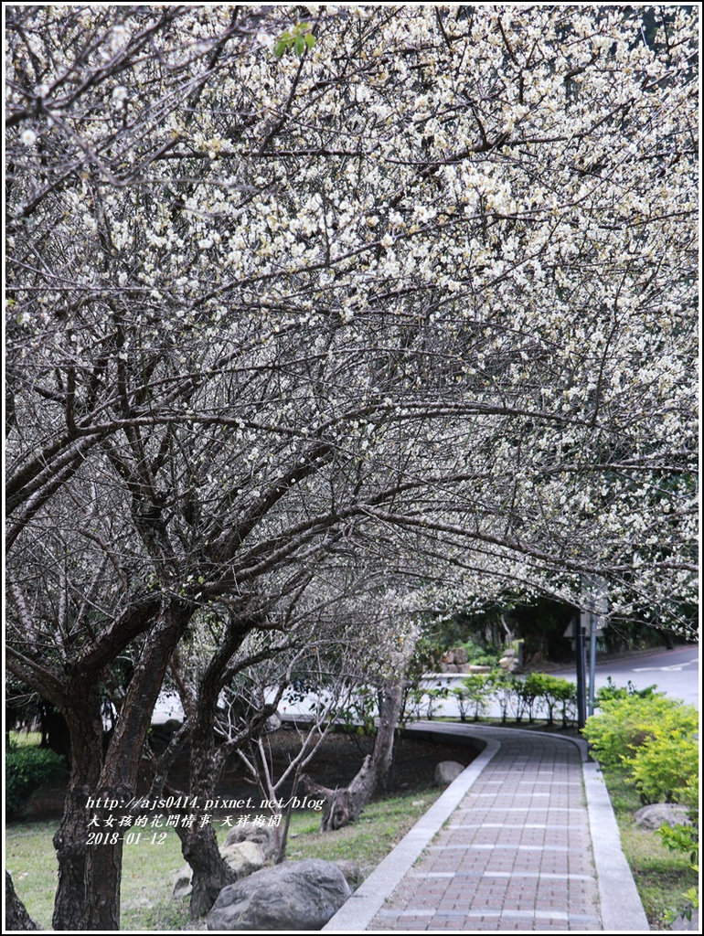 天祥梅園-2018-01-58.jpg