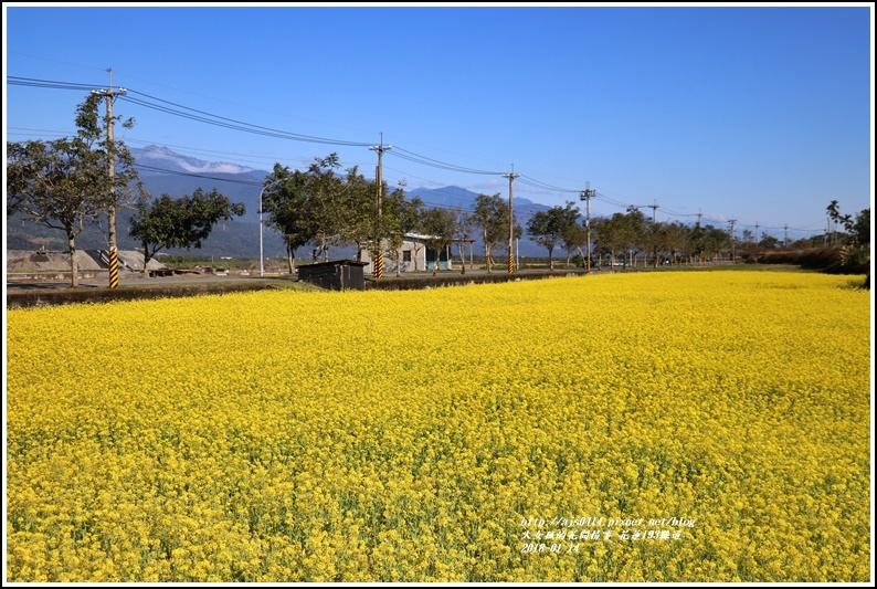 花蓮縣道193油菜花-2018-01-04.jpg