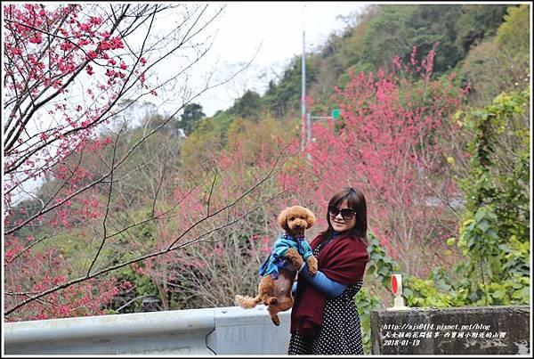 西寶國小附近櫻花-2018-01-08.jpg