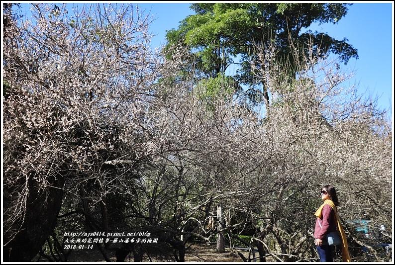 羅山瀑布(梅園)-2018-01-03.jpg