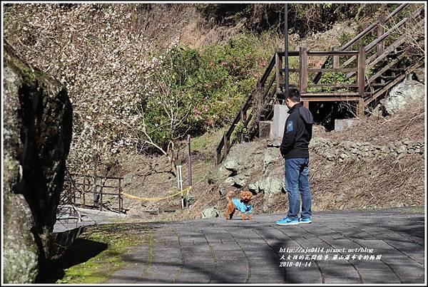羅山瀑布(梅園)-2018-01-07.jpg