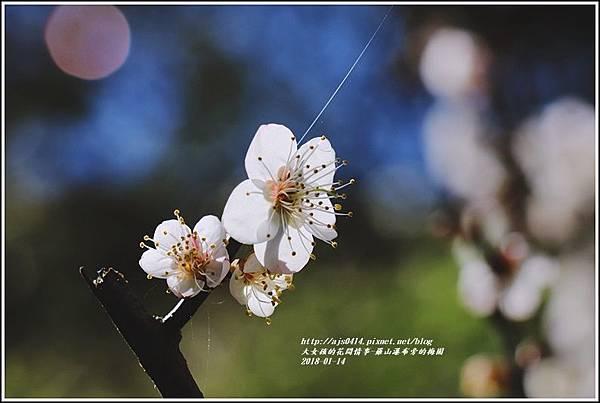 羅山瀑布(梅園)-2018-01-10.jpg