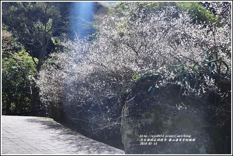 羅山瀑布(梅園)-2018-01-13.jpg