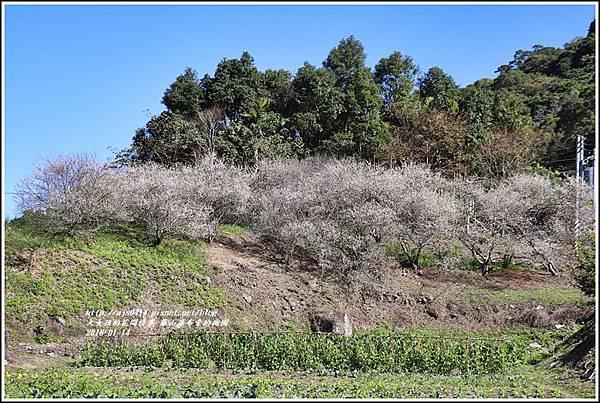羅山瀑布(梅園)-2018-01-16.jpg