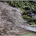 羅山瀑布(梅園)-2018-01-18.jpg