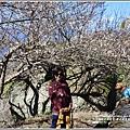 羅山瀑布(梅園)-2018-01-22.jpg