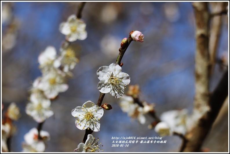羅山瀑布(梅園)-2018-01-29.jpg