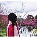 碧赫潭櫻花-2018-01-05.jpg
